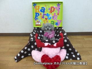 フランちゃん 2歳☆