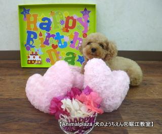 メグちゃん 2歳☆