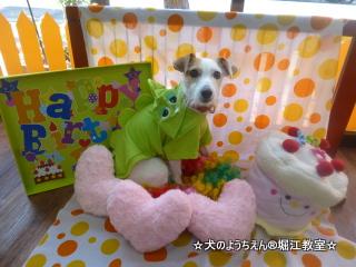 ブナちゃん 2歳☆