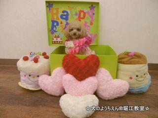 ココちゃん 4歳☆