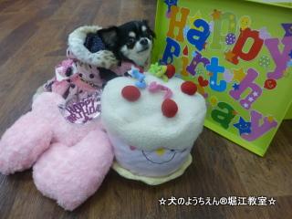 ハニーちゃん 5歳☆
