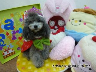 ベアンちゃん 2歳☆