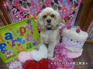 キキちゃん 2歳☆