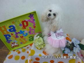 COCORAちゃん 1歳☆