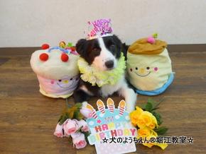ナギちゃん 2歳☆