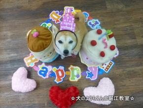 パコちゃん 3歳☆