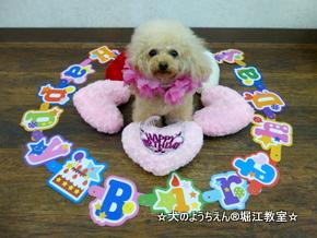 ケリーちゃん 4歳☆