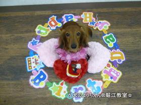 モカちゃん 1歳☆
