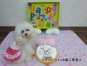 COCORAちゃん 2歳☆