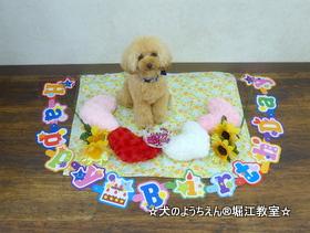 ぷーちゃん 1歳☆