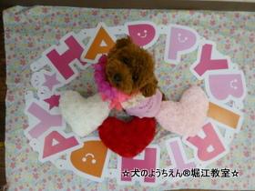 ミオちゃん 1歳☆