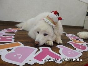 アンちゃん 2歳☆