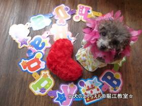 トリコちゃん 1歳☆