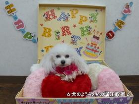 LADYちゃん 2歳☆